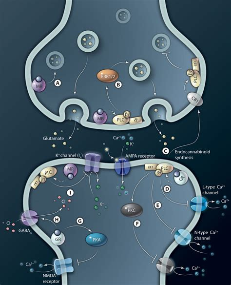 Stress at the Synapse: Signal Transduction Mechanisms of