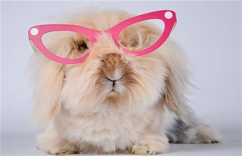 A List of 199 Cute Bunny Names for Your Fuzzball - Pet Ponder