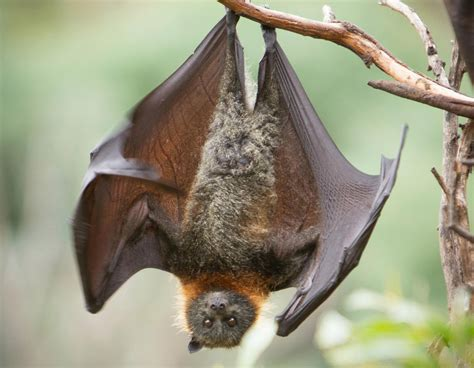 Upside down bat - 10 free HQ online Puzzle Games on