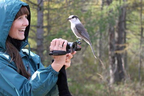 Canada jay gets its fitting name back – RCI | English