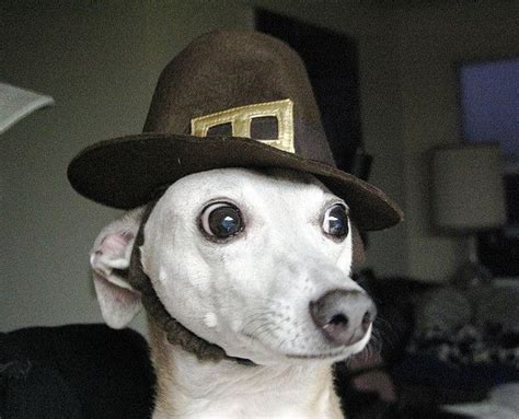 Cute Dogs Alert!! - Pics for some Happy Thanksgiving Cheer
