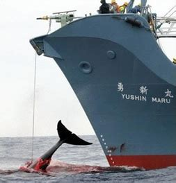 Whaling and Over Fishing - Antarctica Uncovered