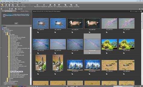 Best 10 Photo Organizing Software for Computer 2019